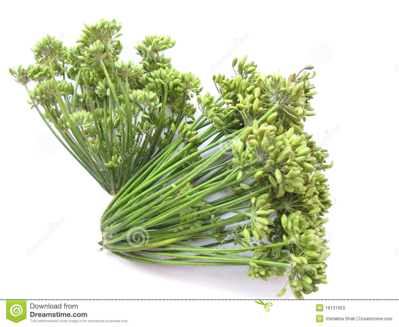 Fennel Seeds Stock Photos.
