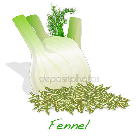 Fennel seeds Stock Vectors, Royalty Free Fennel seeds.