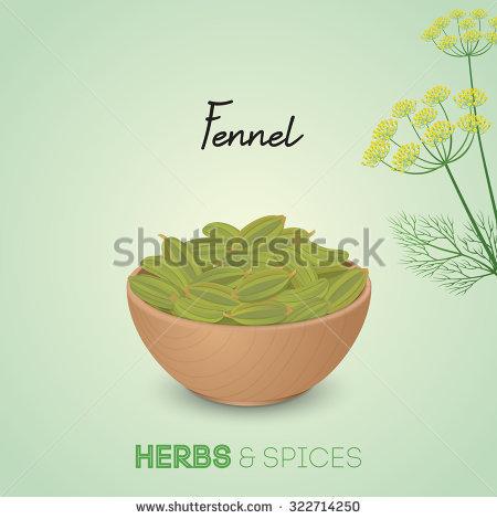 Fennel Seeds Lizenzfreie Bilder und Vektorgrafiken kaufen.