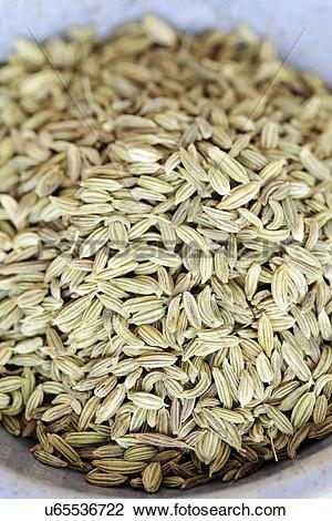 Clip Art of Fennel seeds u65536722.