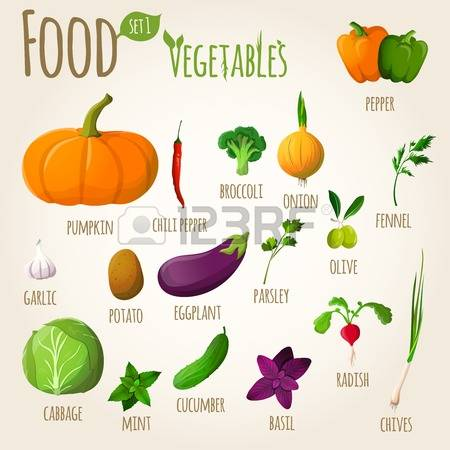 Fennel vegetable clipart #14