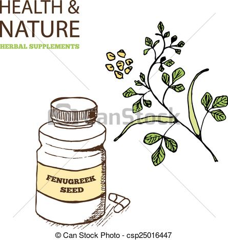 EPS Vector of Health and Nature Supplements Collection. Fenugreek.