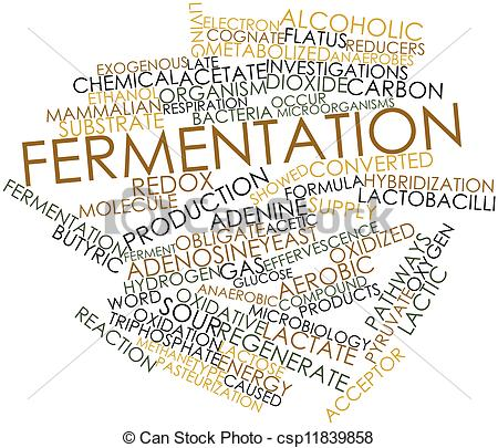 Stock Illustrations of Fermentation.
