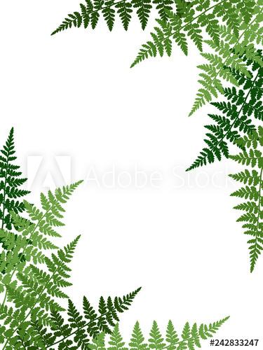Fern frond tropical leaves frame vector illustration. Bush.