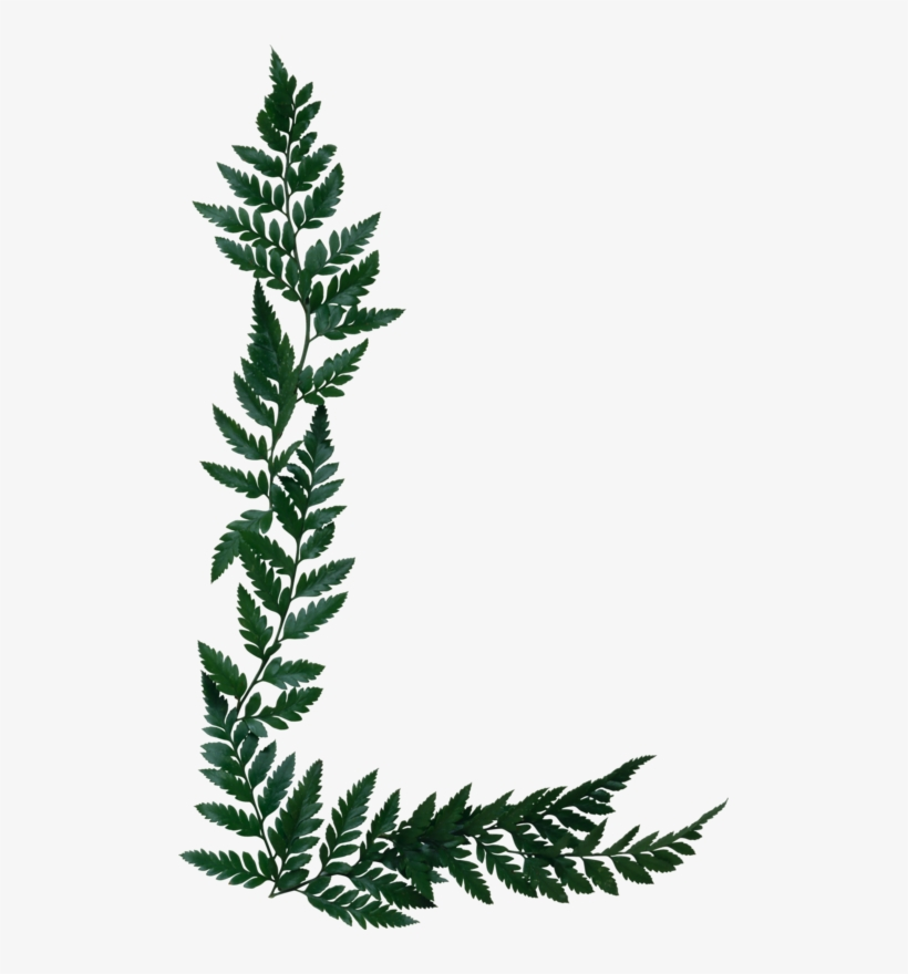 Fern Clipart Olive.