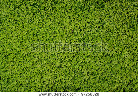 Green Fern Carpet Stock Photo 97258328 : Shutterstock.