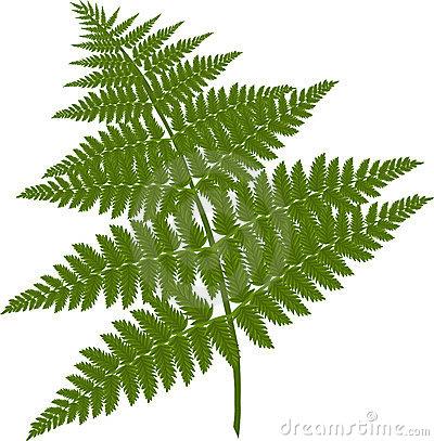 Clipart fern.