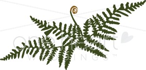 Fancy Fern Clipart.