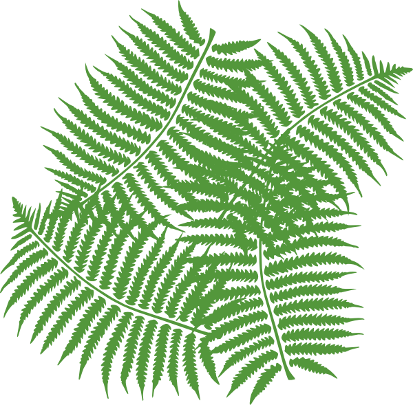 Four Fern Leaves Clip Art at Clker.com.