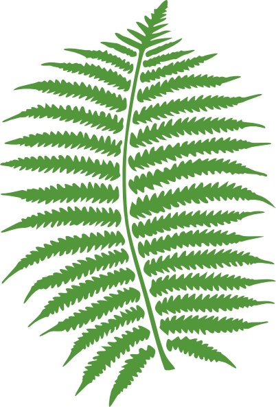 Fern clip art Free vector in Open office drawing svg ( .svg.
