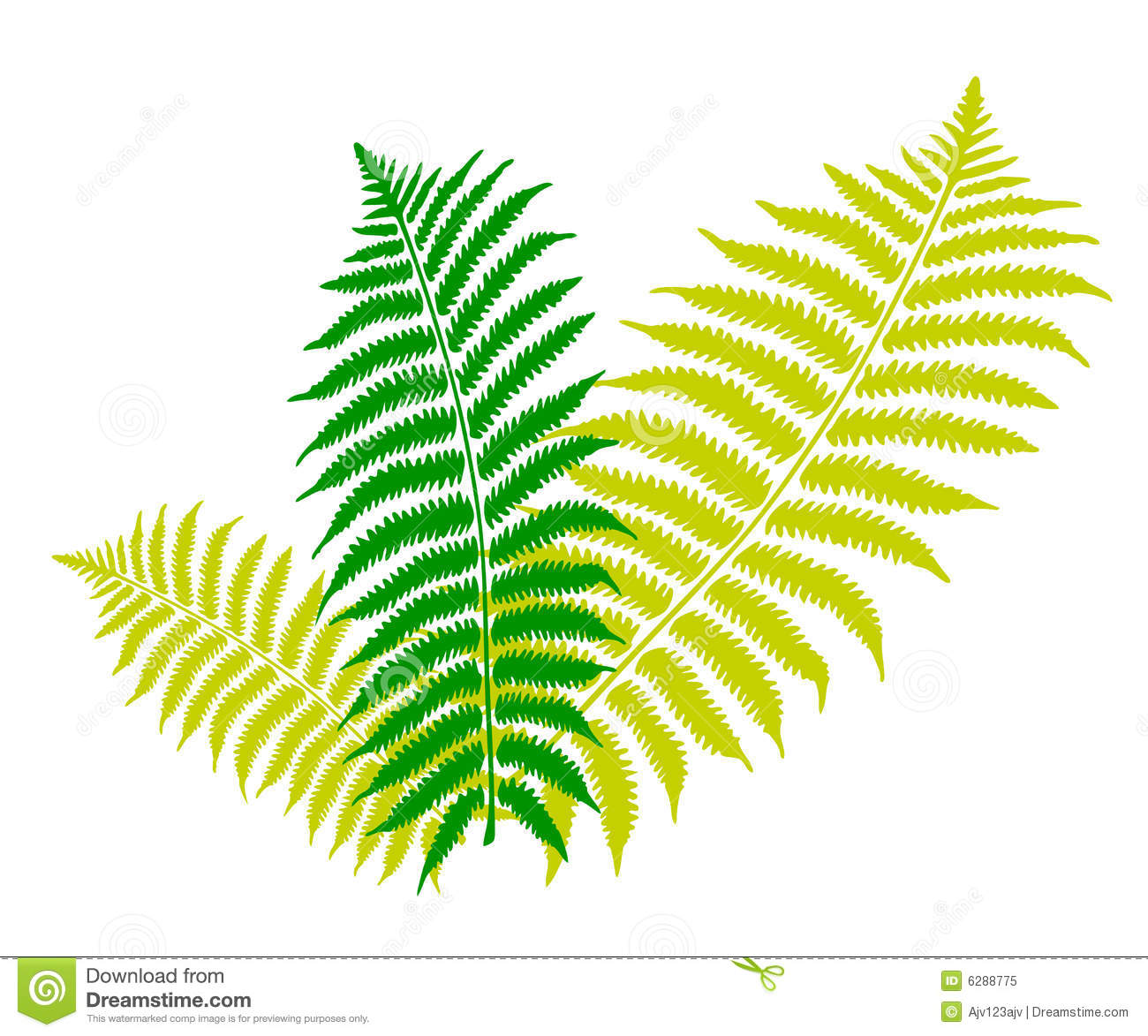 Fern Stock Illustrations.