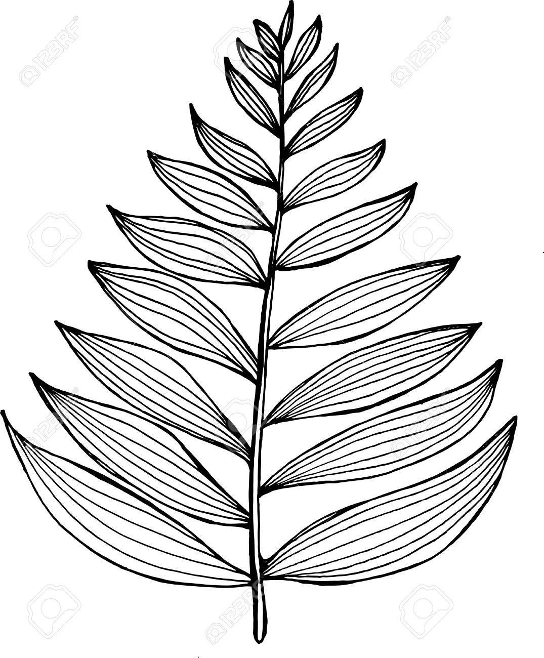 Black and white picture of a fractal leaf. Branch of a fern.
