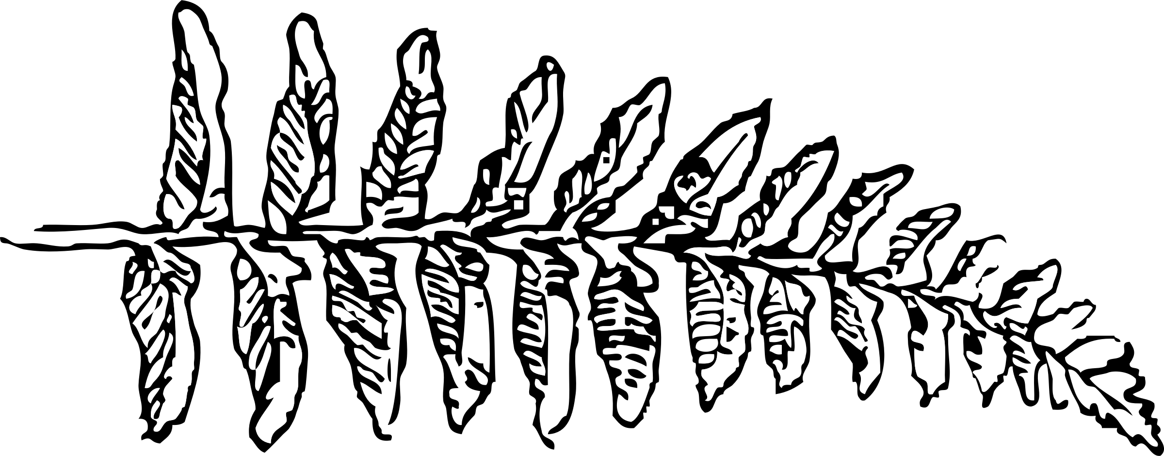 Free Fern Clip Art Black And White, Download Free Clip Art, Free.