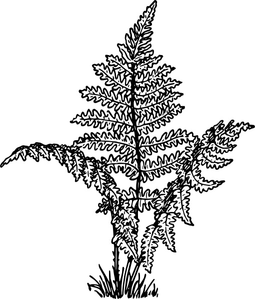 Fern Plant clip art Free vector in Open office drawing svg.