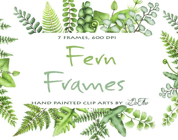 Watercolor Fern Clipart Greenery Frames Clip Art Ferns Leaf.