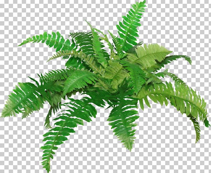Fern clipart academic, Fern academic Transparent FREE for.