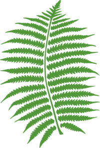 Fern Leaf Clip Art at Clker.com.