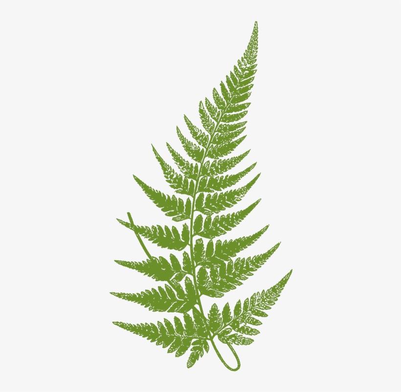 Download Free png Transparent Fern Leaves Svg Stock Fern Leaf.