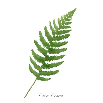 Fern Vectors, Photos and PSD files.