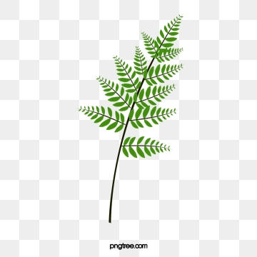 Fern Png, Vector, PSD, and Clipart With Transparent Background for.