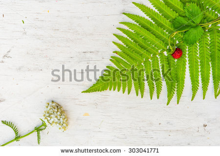 Woodland Strawberry Stock Photos, Images, & Pictures.