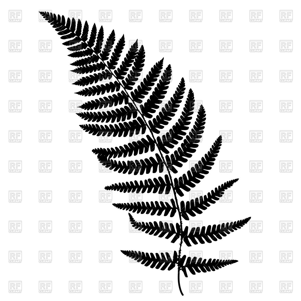 Free clip art ferns.