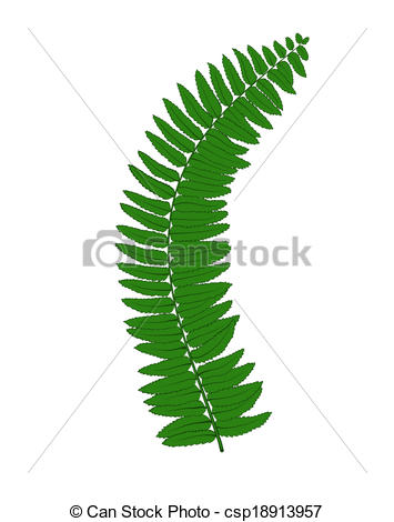 Clipart Vector of Beautiful fern leaves isolated on white.