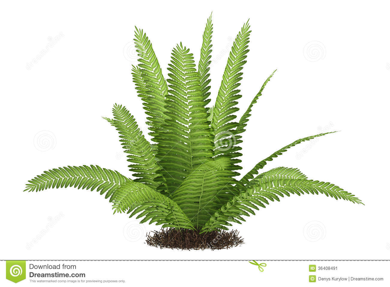 Ferns clipart with transparent background free.