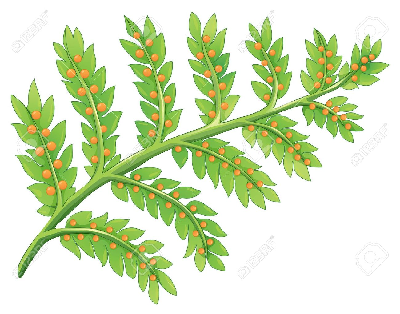 Illustration Of A Fern Plant Royalty Free Cliparts, Vectors, And.