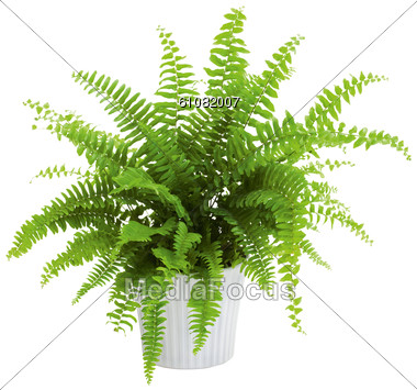 Fern Plants Clipart Clipground