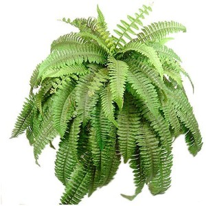 Hanging Fern Clipart.