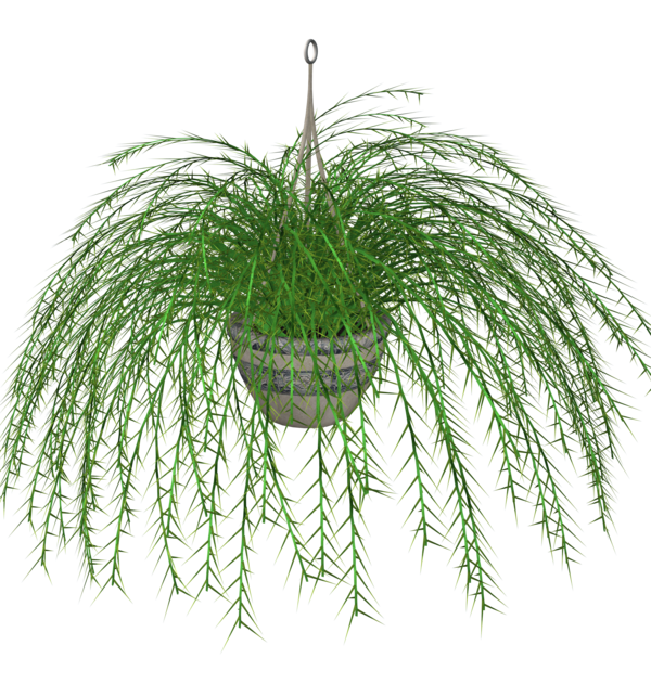 Hanging Fern stock plant by madetobeunique on DeviantArt.