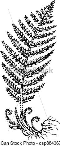 Vector Clipart of Plant fern.
