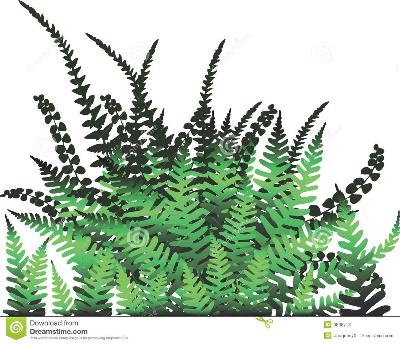Fern Plant.