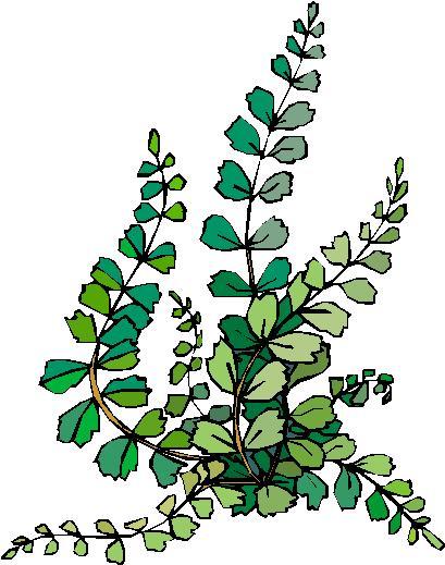 layerwetlandwiki / 2nd Grade Plant Field Guide Project.