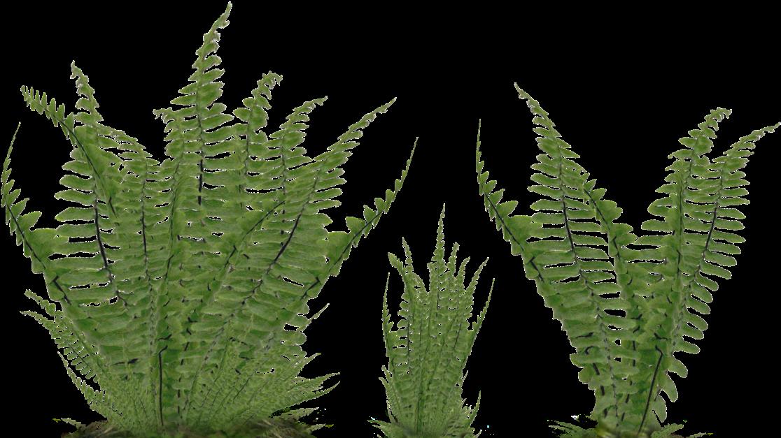Foliage Png.