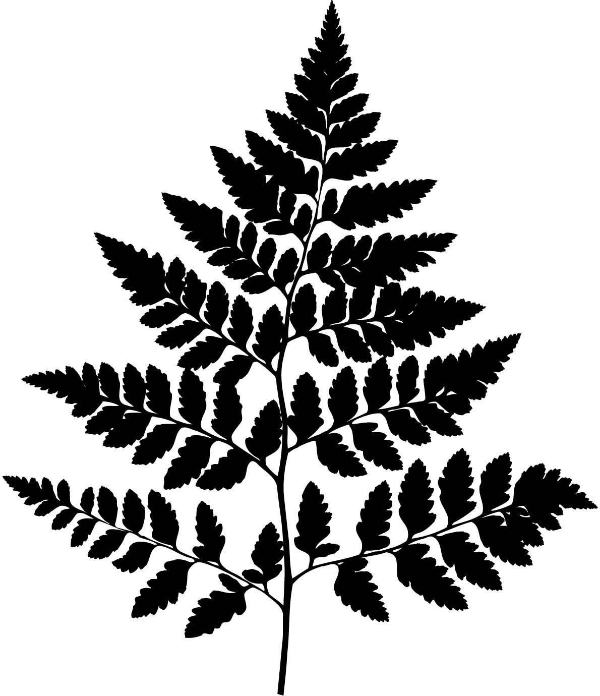 Free Fern Clip Art Black And White, Download Free Clip Art.