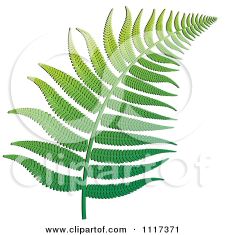 Clipart of a Fern Branch.