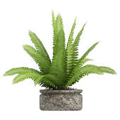 Potted fern clipart.