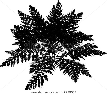 Fern cliparts.