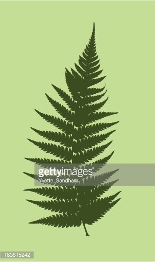 Fern Vector Clipart Image.