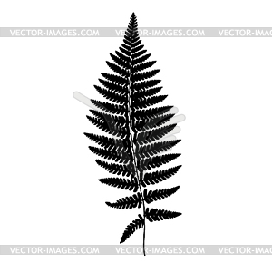 Fern frond black silhouette. . Forest concept.