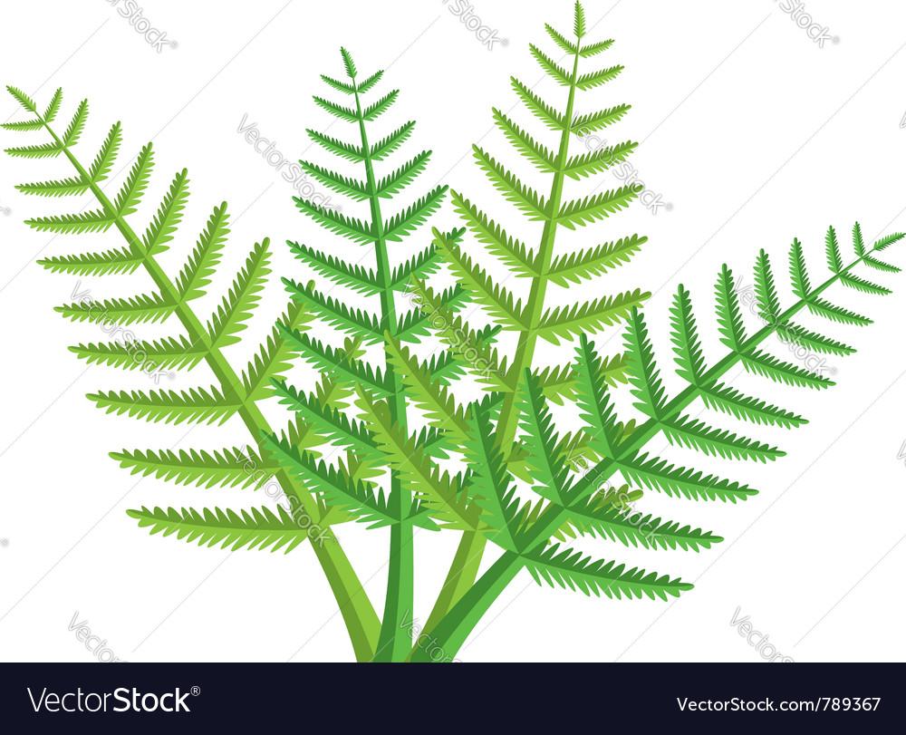 Green fern leaves.