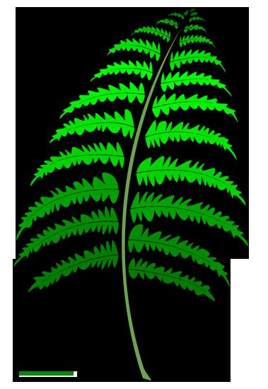 Fern Leaf Clip Art, Fern Leaf Clip Art Download bitmap clipart.