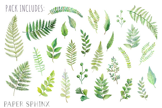 Watercolor Ferns Clipart Forest Leaves Clipart Greenery.