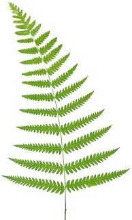 Similiar Foliage And Ferns Clip Art Keywords.