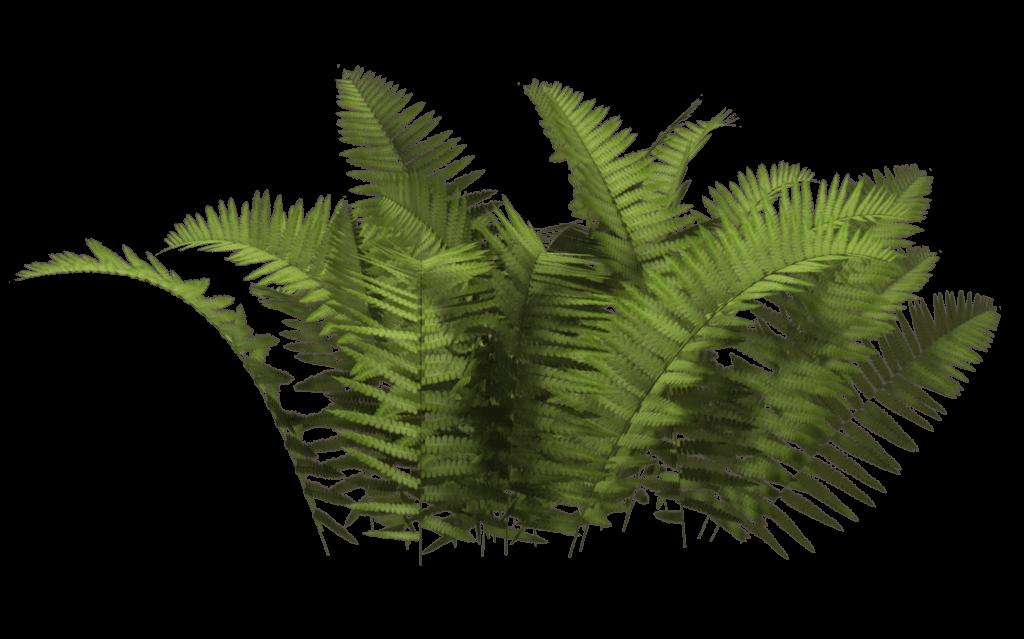 Ferns Bush transparent PNG.