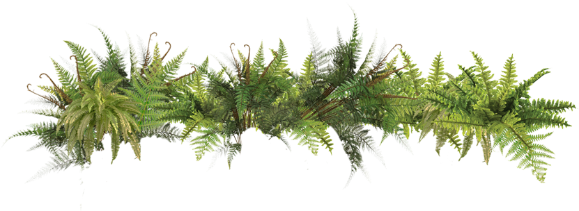 Picture Ferns PNG #26184.