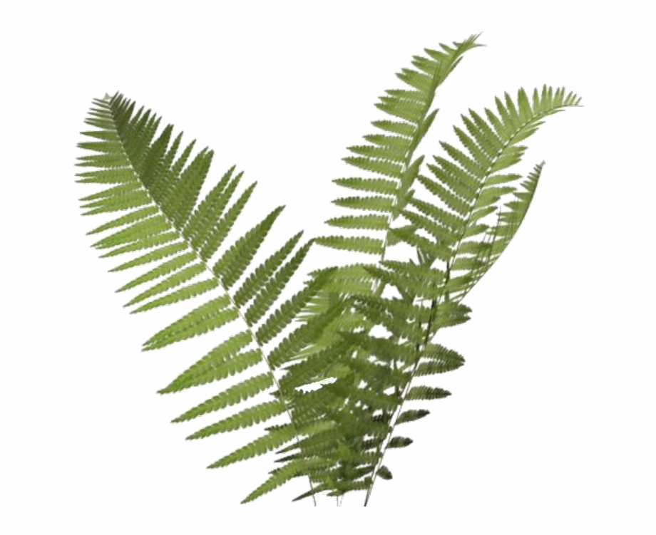 Fern Clipart Transparent Background Free PNG Images & Clipart.
