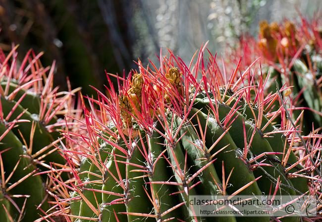 Cactus : ferocactus_pringle_850 : Classroom Clipart.